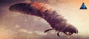 Larvas energéticas y parásitos astrales