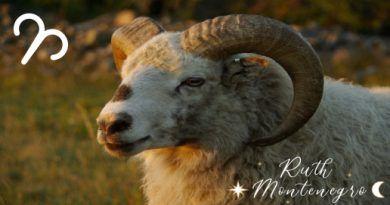 Signo Aries Anual 2020 Ruth Montenegro 390x205 - ¿Tu signo zodiacal puede estar equivocado?