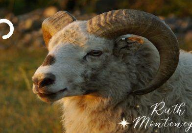 Signo Aries Anual 2020 Ruth Montenegro 392x271 - El Sol en Tauro